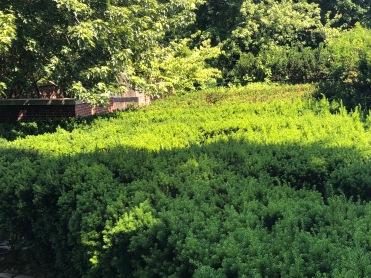 Snug Harbor, formal garden